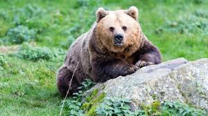 Whipsnade bear