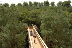 Families on the Tree Top trail at Salcey forest