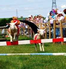 Sheep-Racing-at-Mead-Open-Farm1